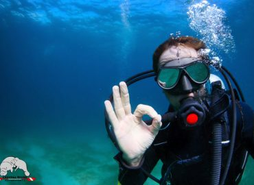Beginner Dive Mistakes: How to Avoid Them?