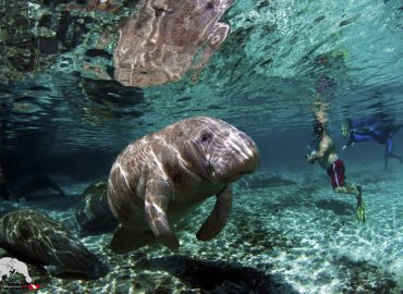 How to Choose a Manatee Tour in Florida?