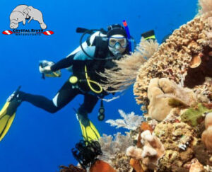 best scuba diving in Crystal River